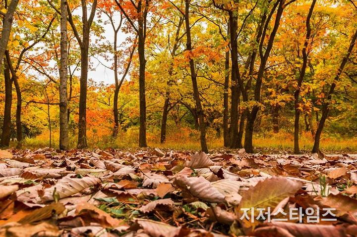가을 낙엽의 눈물2-02.jpg